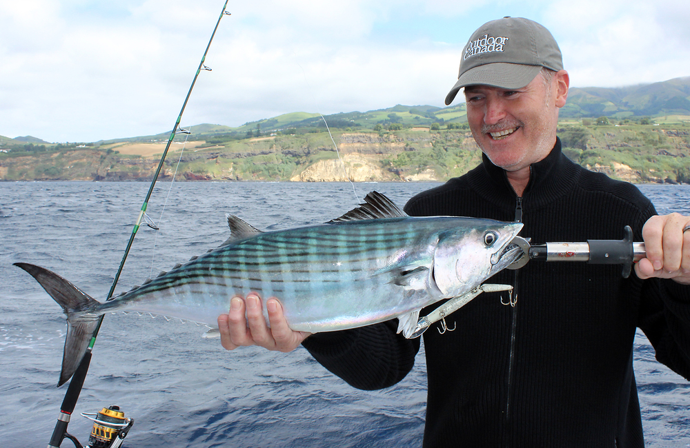 Now that's more like it, an Atlantic Bonito