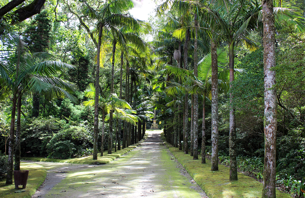 An avenue of trees within the Terra Nostra Park