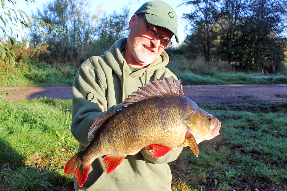 At last, and after putting in plenty of hours fishing I finally hold a massive perch, going 4lb 4ozs