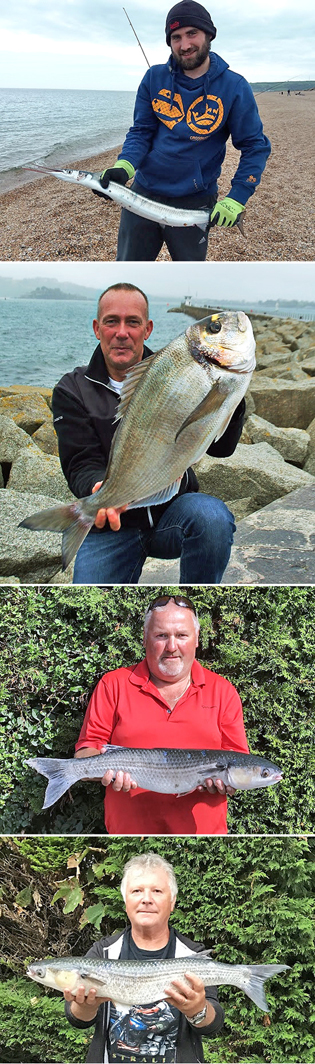 From the top: Chris Davey - Garfish, Robert Wheaton - Gilthead Bream, Tim Cotterill - Thin-lipped Grey Mullet, Geoff LePage - Thin-lipped Grey Mullet