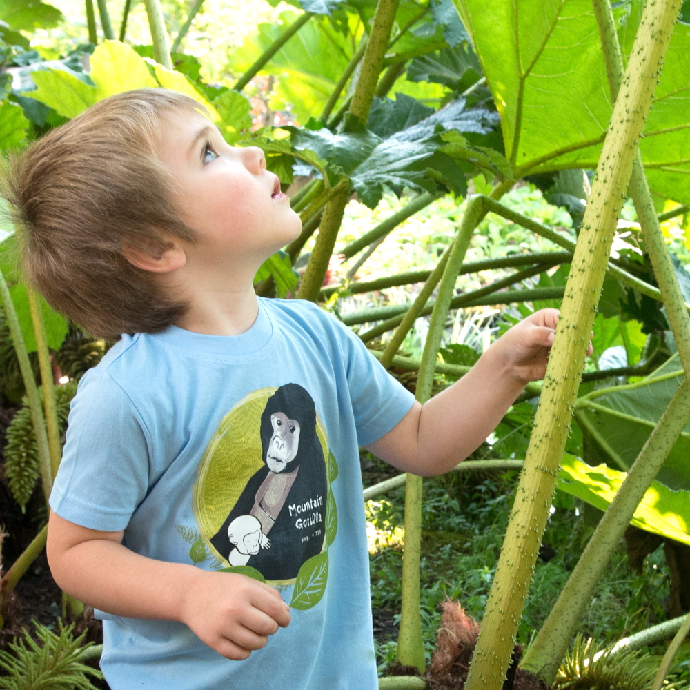 $1 for One.       SpeeZees  Mountain Gorilla kids tee in Baby Blue .    