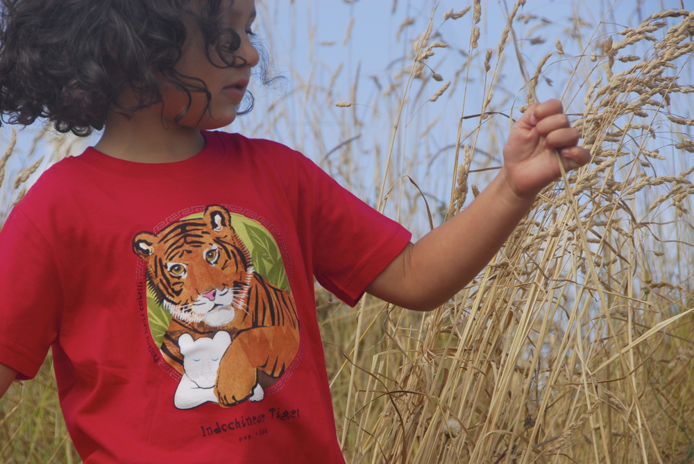 $1 for One.  Support the extraordinary work of Panthera by purchasing a SpeeZees Indochinese Tiger t-shirt in Ladybug or Natural.  Made from 100% GOTS certified organic cotton.