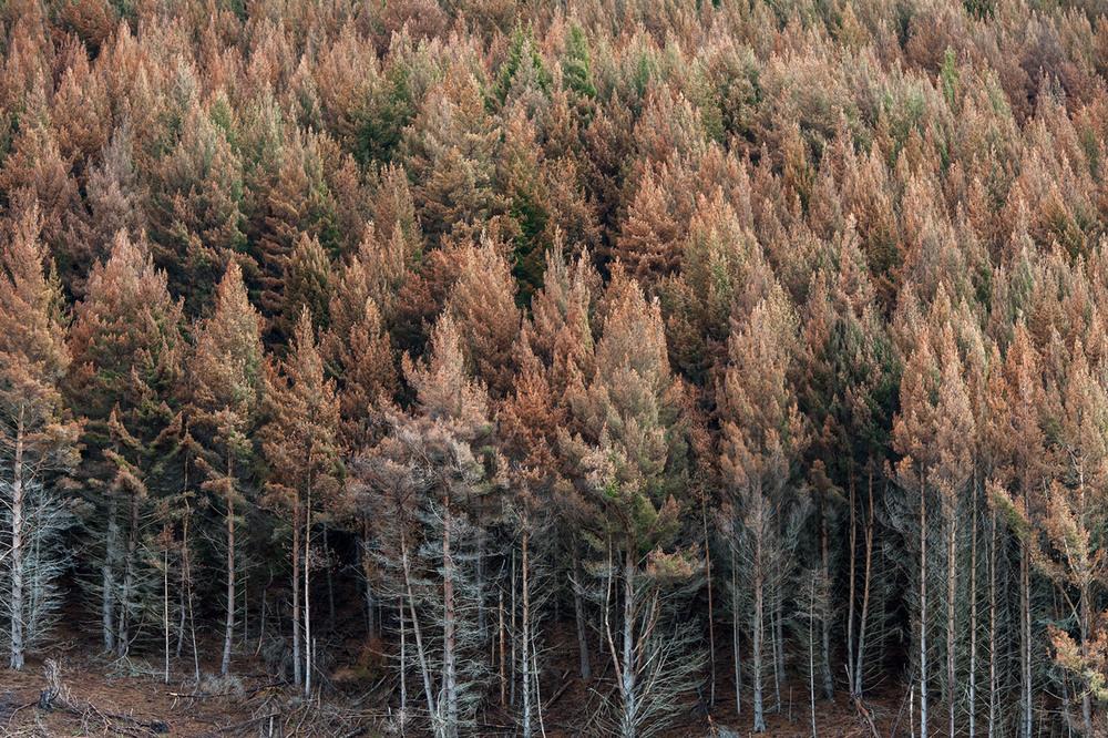 Moke Forest