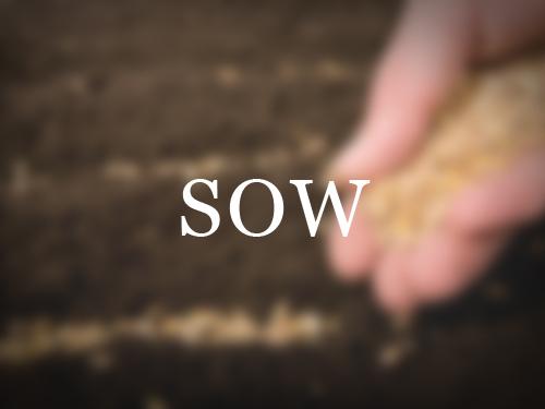 sow.jpg