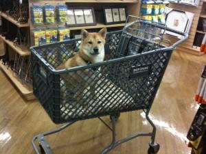 Shio in cart