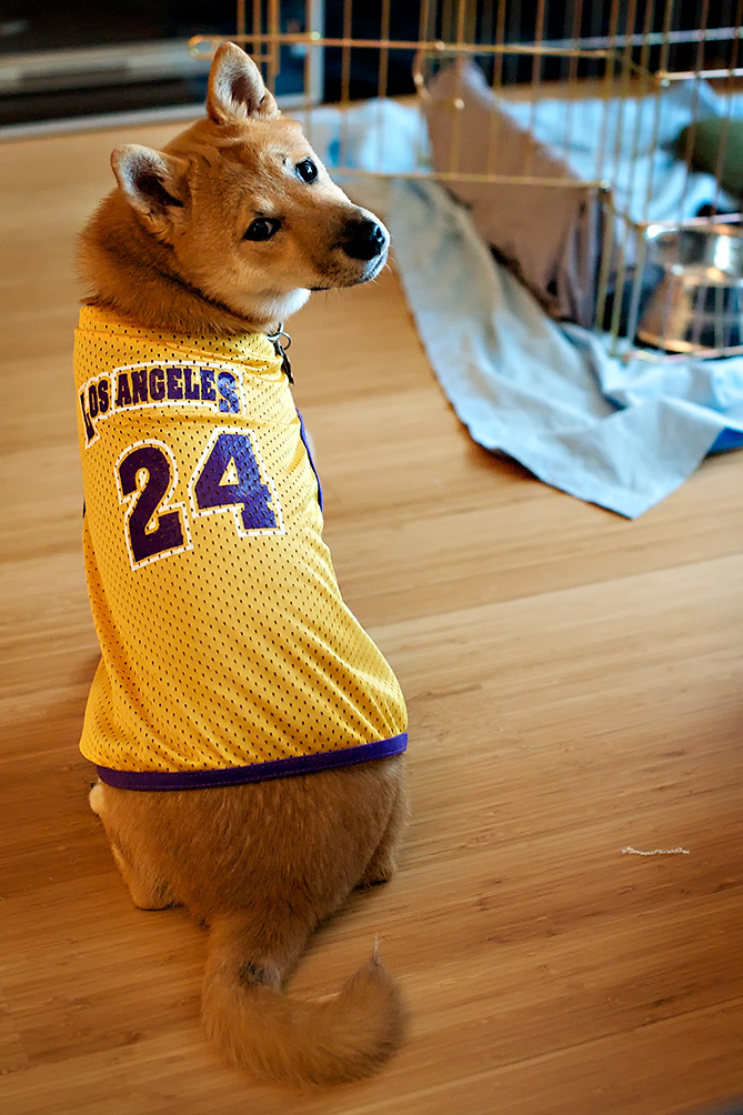 Go Kobe Go
