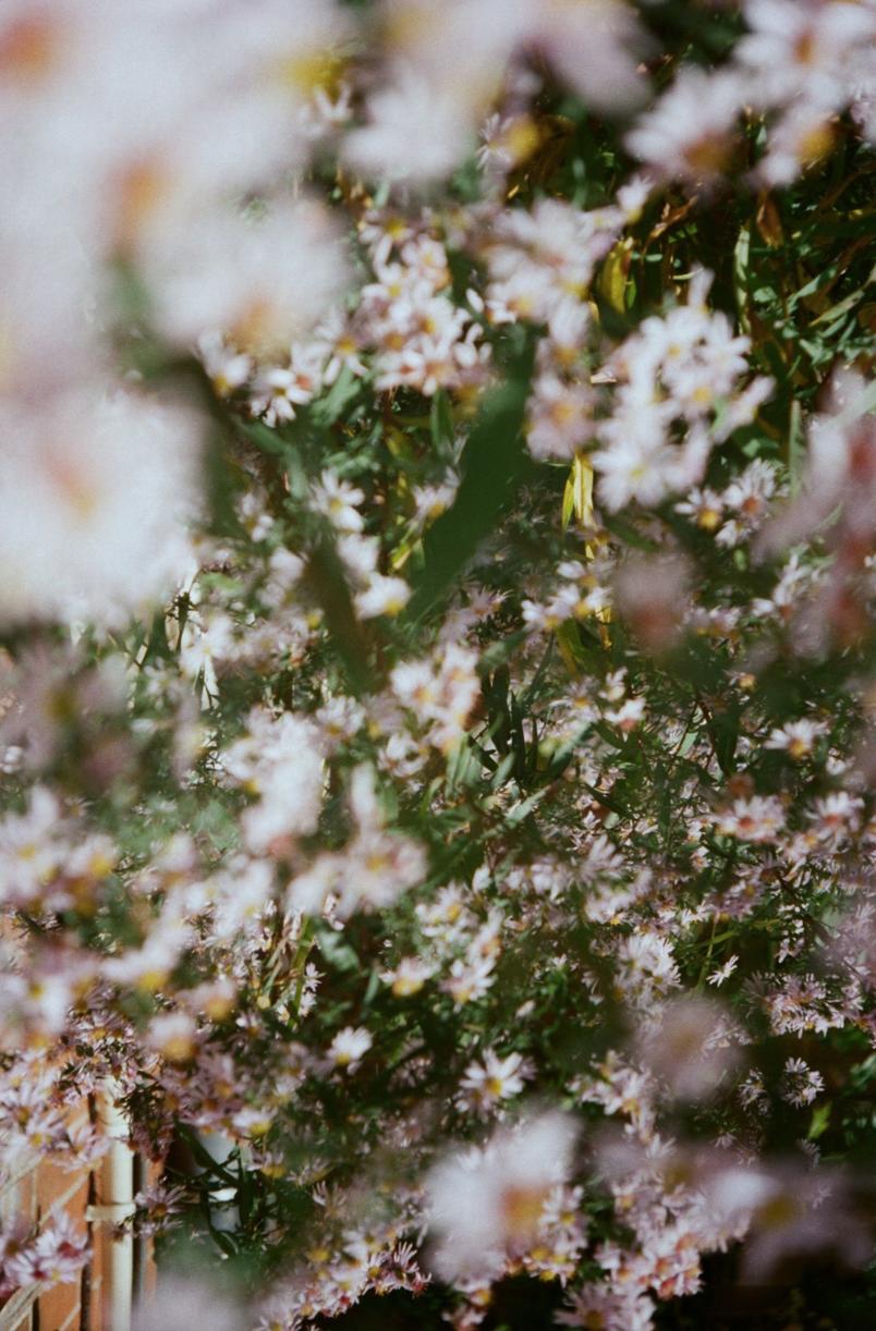 j.osborn.flowers.2016