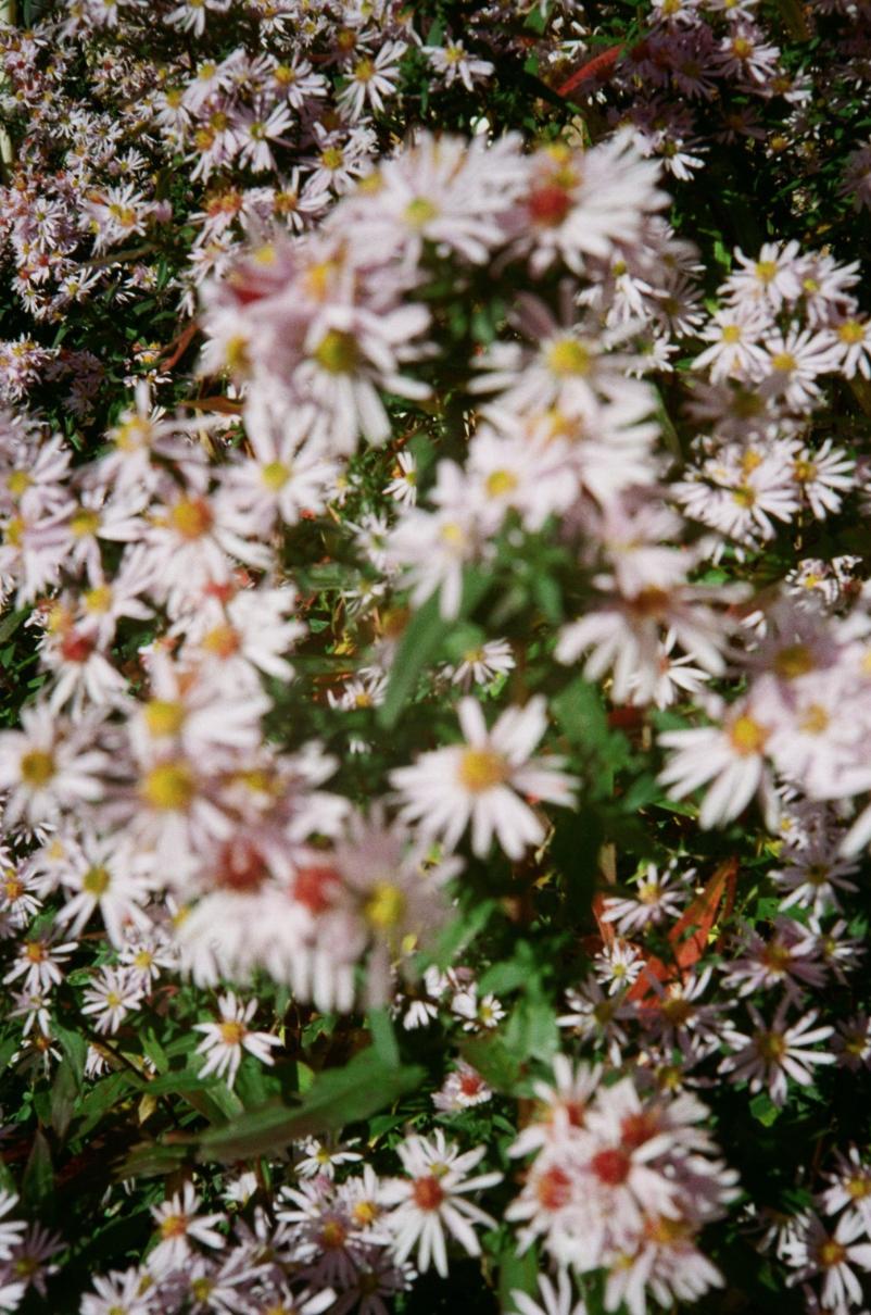 flowers.j.osborn.2016.2