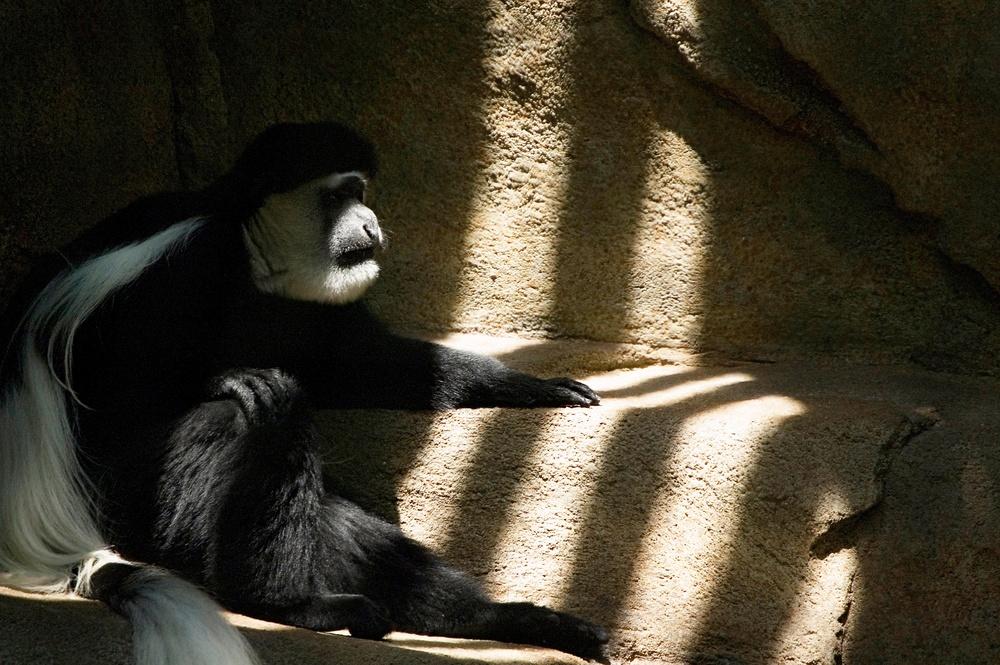 Zoo_Aug_17_06100.jpg