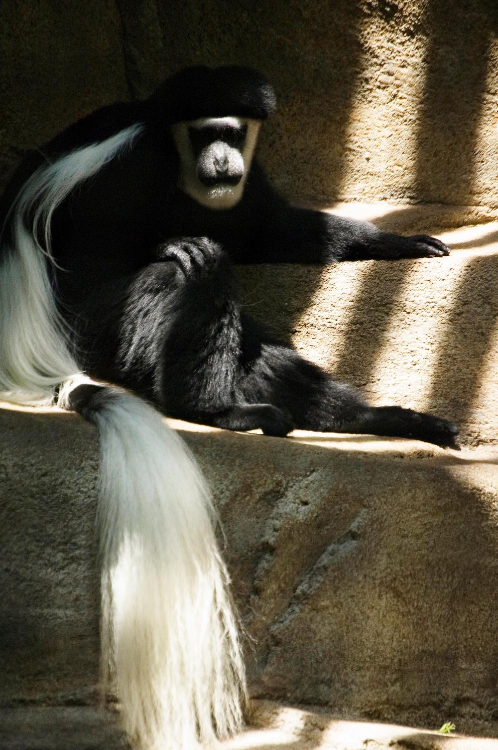 Zoo_Aug_17_06101.jpg