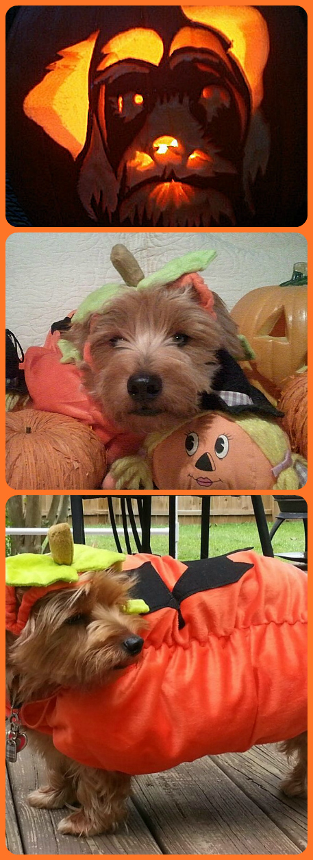 Pumpkin2 Collage.jpg