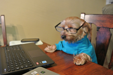 workindog1.JPG