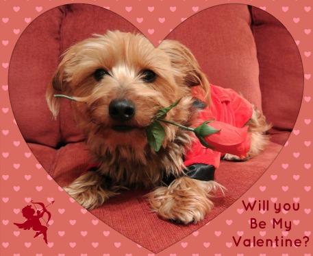 Valentine2013.jpg