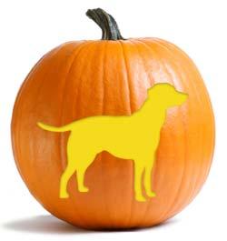 Pumpkin Head Time — The Canine Chef Cookbook