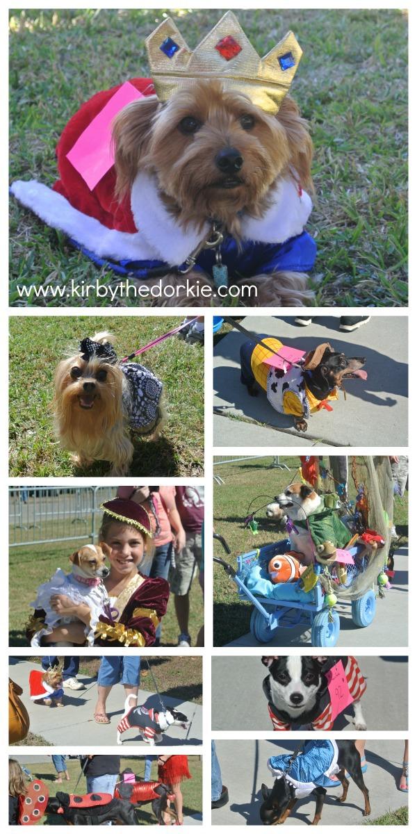 pet parade collage