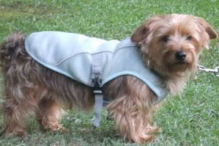 Ruff Wear Swamp Vest