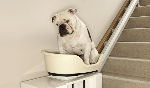 Stair of The Dog 2022