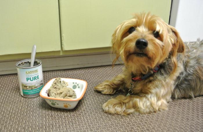 پختن غذای سگ
