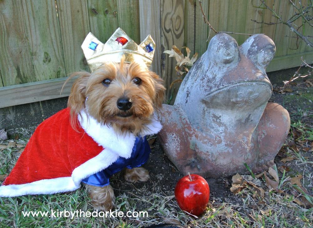 The Royal Pup