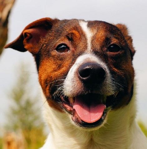 Dog 5.jpg