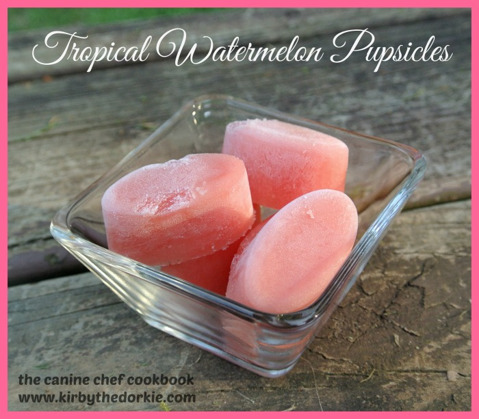 Tropical Watermelon Pupsicles