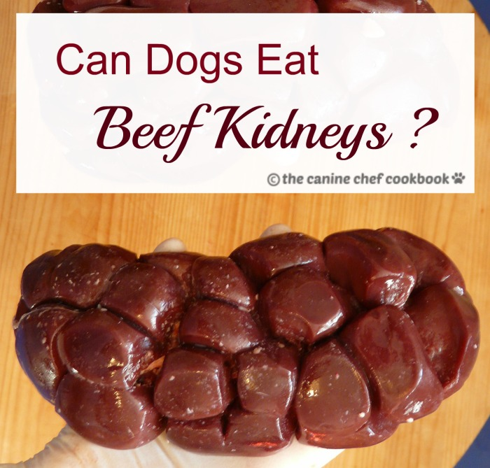 Can dogs eat beef kidneys?