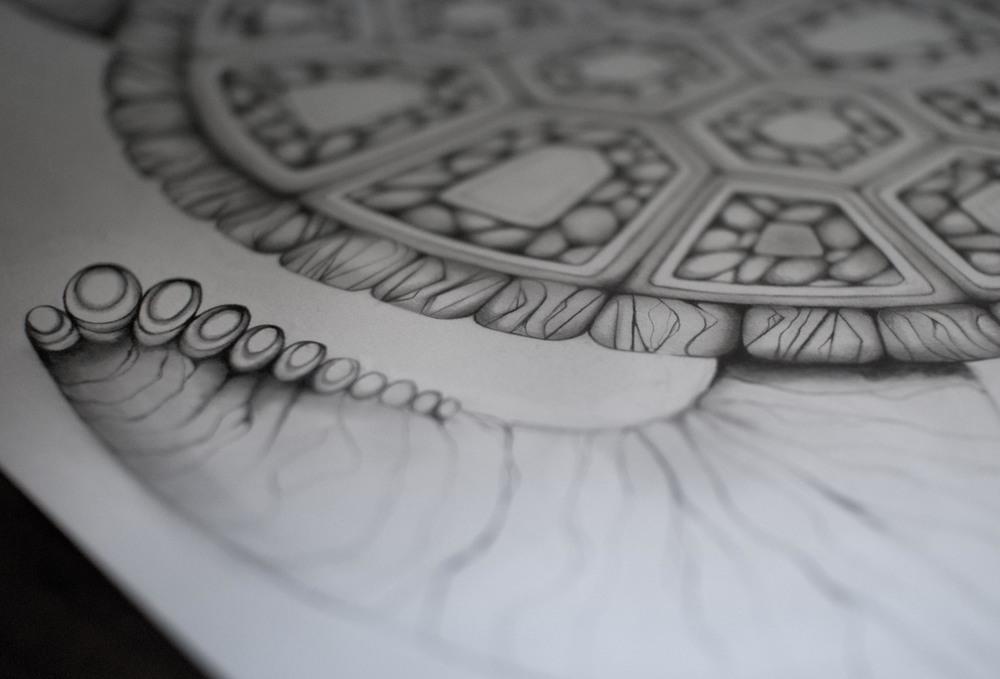TurtleDrawing2.jpg