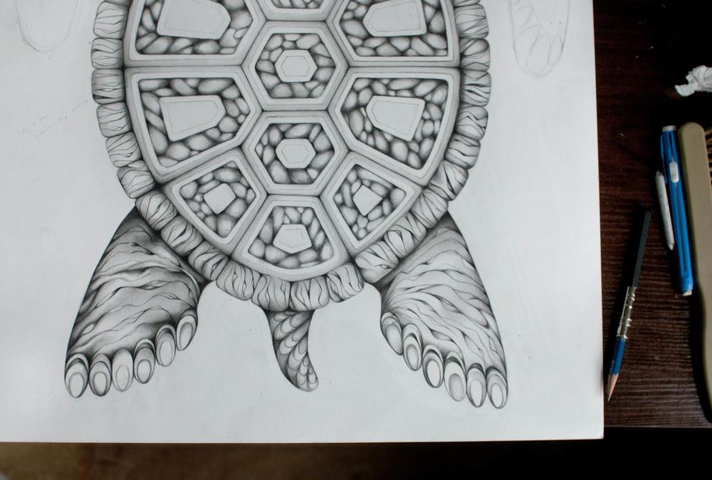 TurtleDrawing4 Adrianna Grezak
