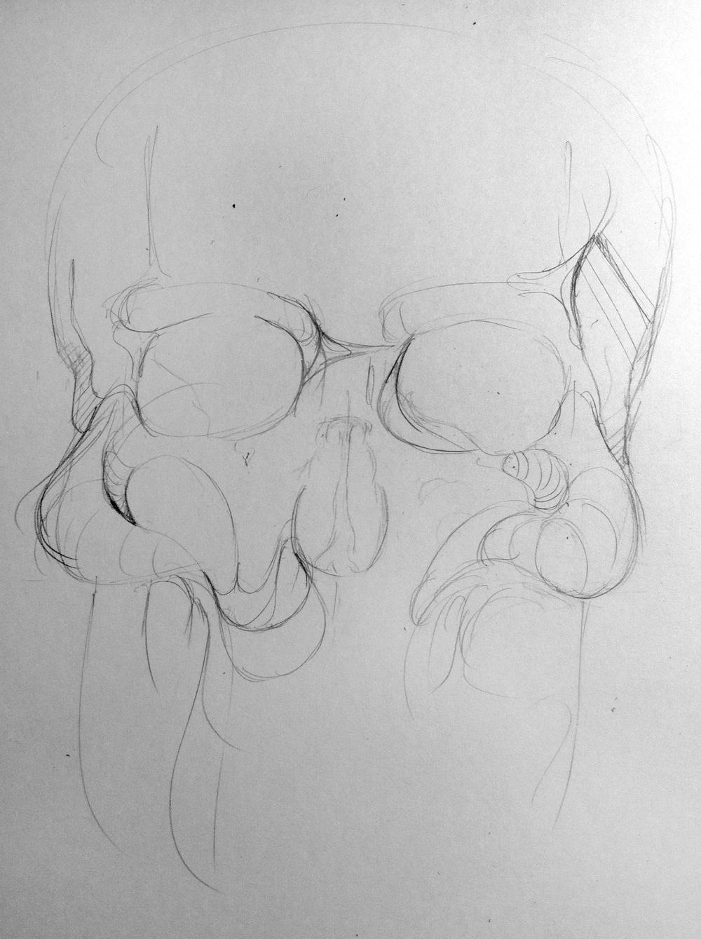Skull WIP 1.JPG