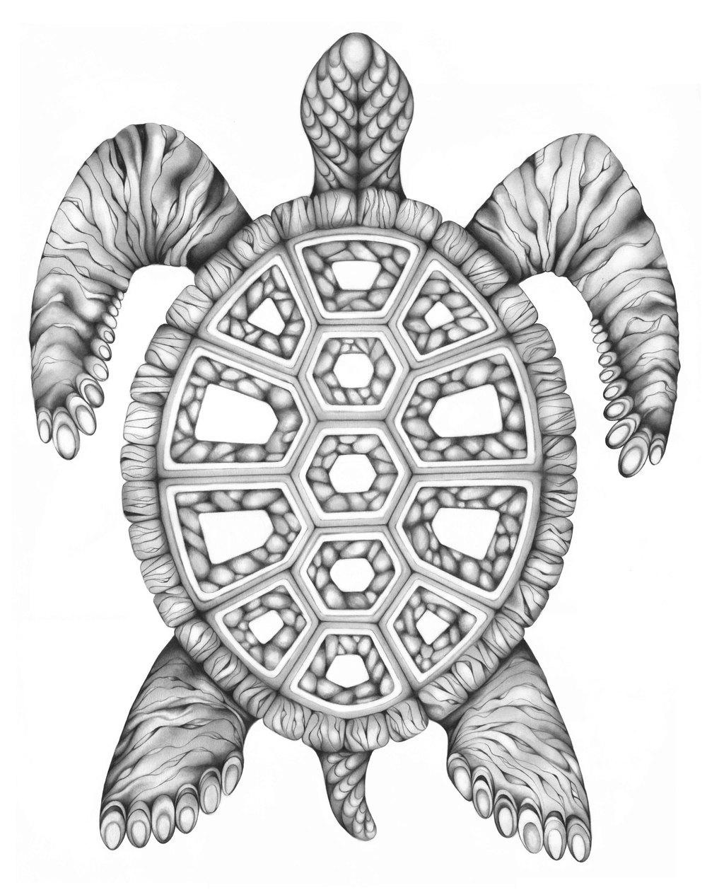 Turtle BW Web File.jpg