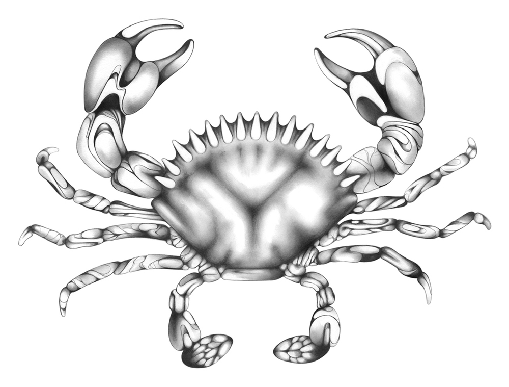 BW-web-Crab-July-2013.jpg