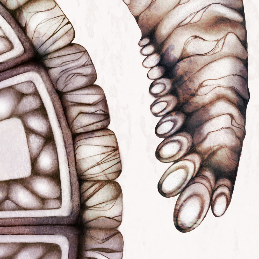 Turtle+illustration+drawing+art+2.jpg