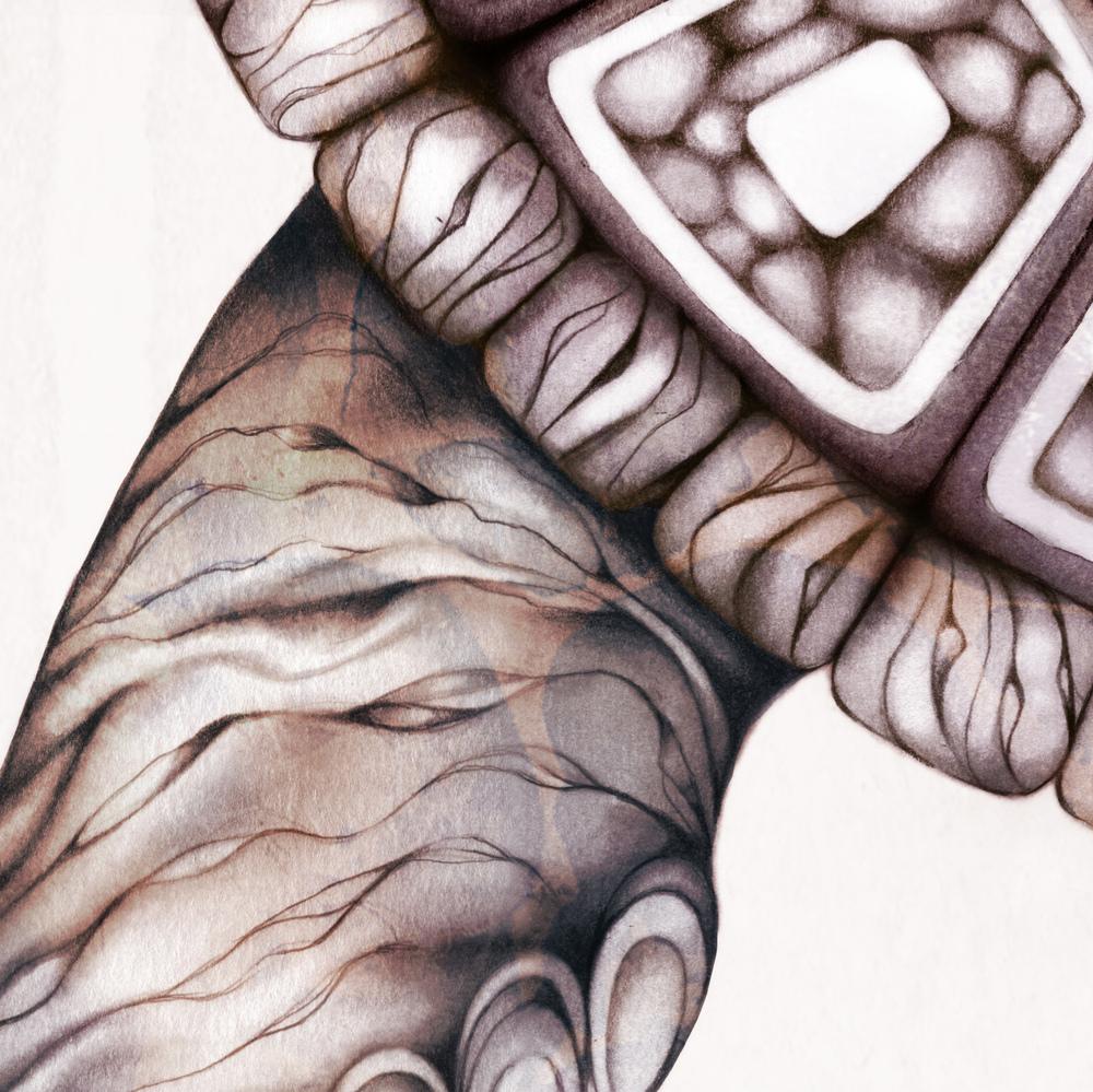 Turtle+illustration+drawing+art+4.jpg