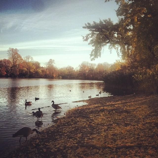 Prospect Park 1.jpg