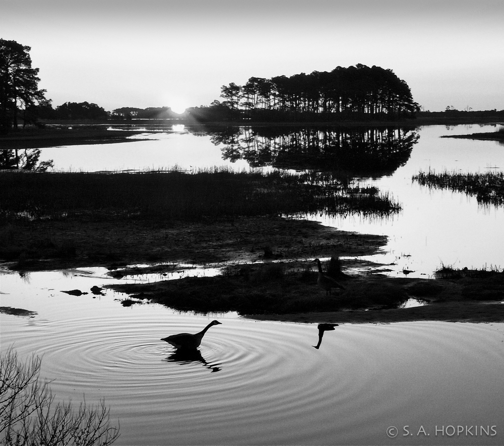 assateague_sunrise_geese_bw.jpg