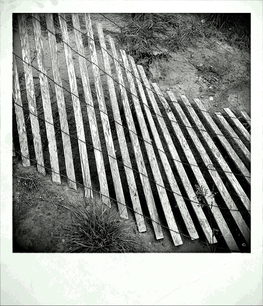 fence_polaroid-ish.jpg