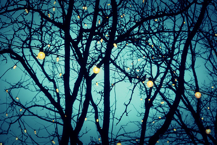 Photography lights in trees.jpg