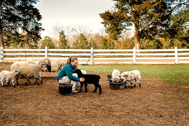 At Mount Vernon, Lisa Pregent is bringing back animals George Washington himself would recognize. A profile for  Washingtonian .
