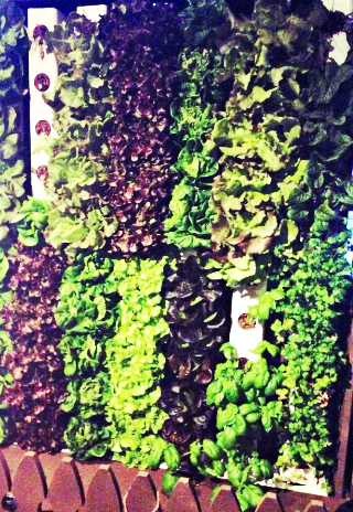 Vertical Garden at Boca Kitchen Bar and Market | Foodable WebTV Network