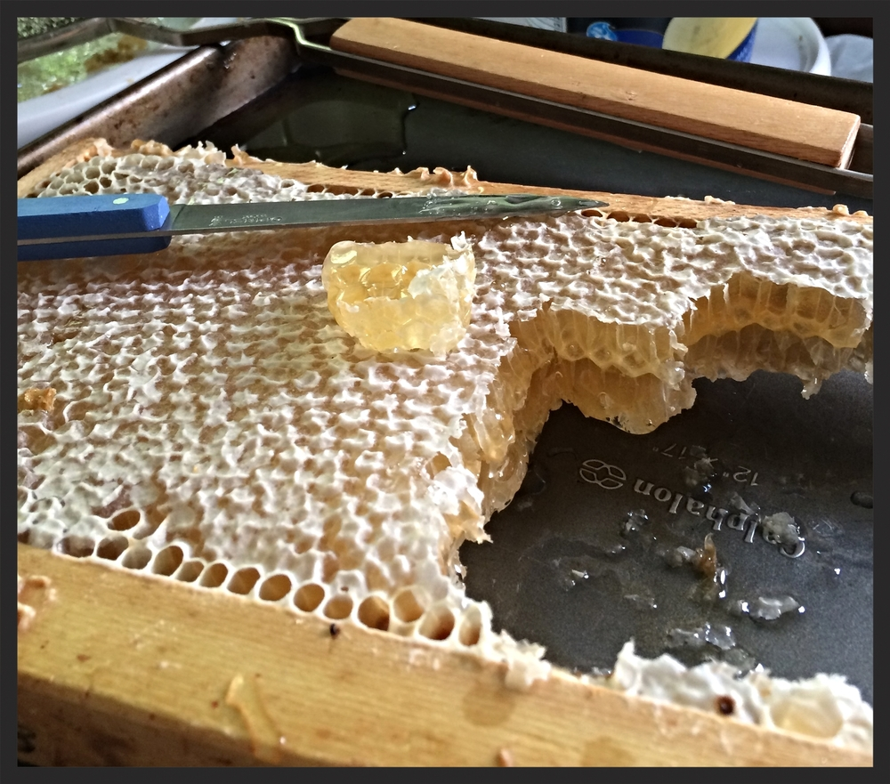 Honey Comb from FredD's Bees  | FOODABLE WEBTV NETWORK