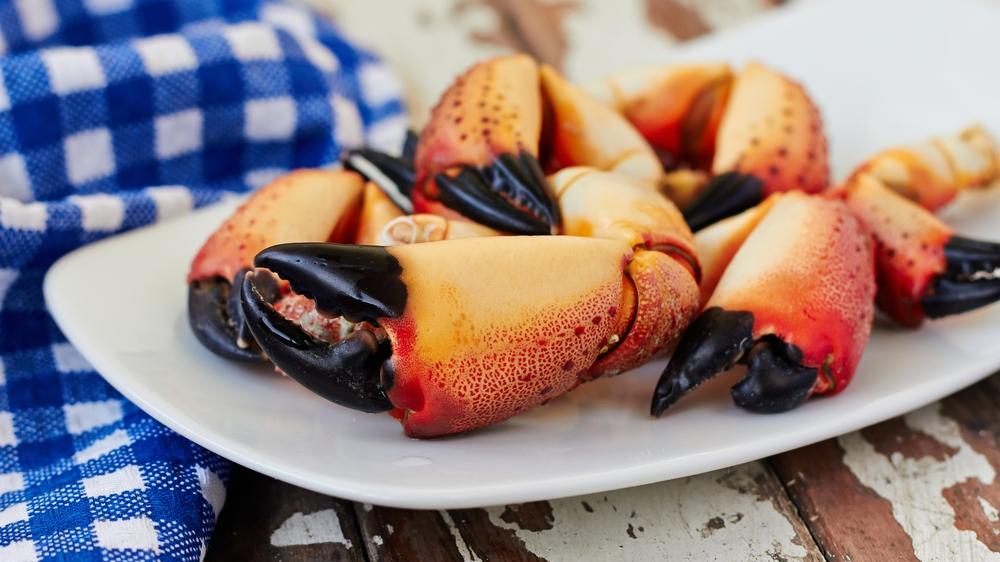 Harvest Season for Florida's Stone Crab Returns