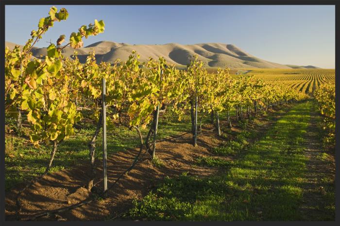 Santa Maria Wine