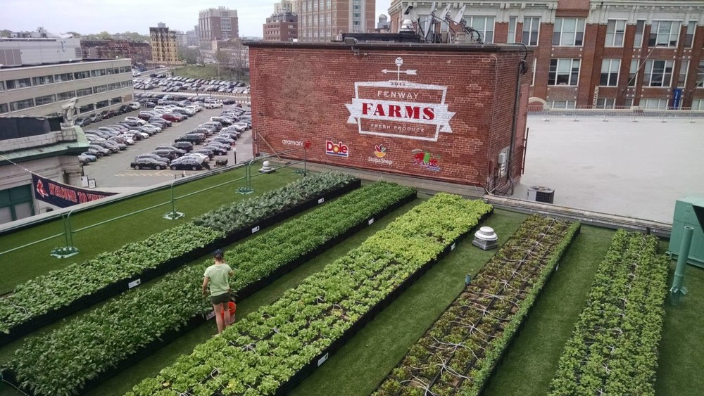 Fenway Park's rooftop garden, Fenway Farms  | Credit: Green City Growers