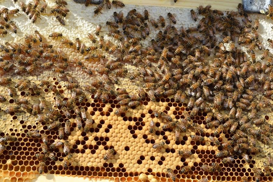 Honey harvest in Boston's Seaport | Credit: Seaport Hotel