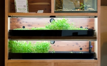 Aquaponics Vegetable Tanks | Courtesy of Mobius Microfarms