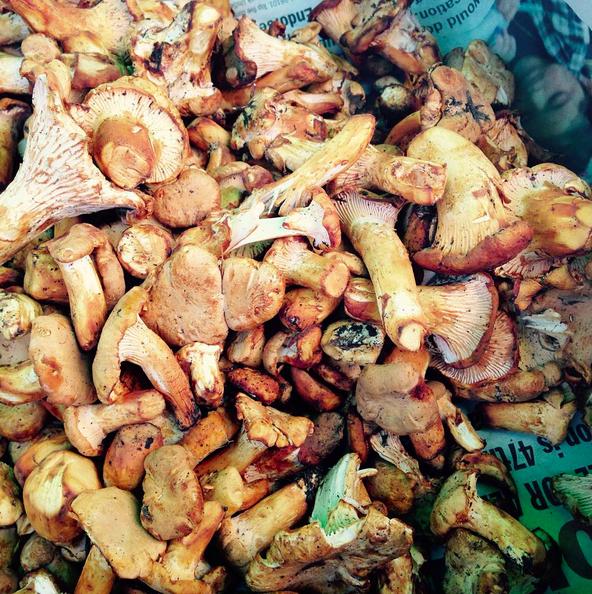 Chanterelles at Ballard Farmers Market | Instagram, @sfmamarkets