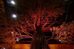 Clifton's Giant Redwood | Allison Levine for FoodableTV