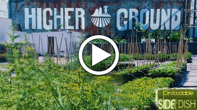 Farm to Fork: Exploring Boston's Rooftop Farms [VIDEO]