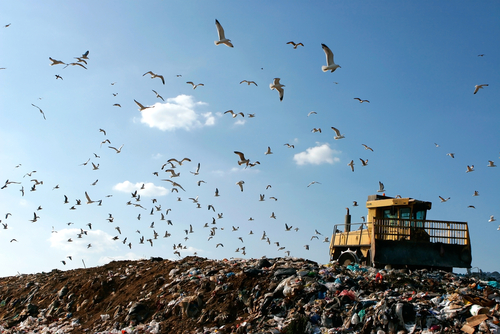landfill food waste.jpg