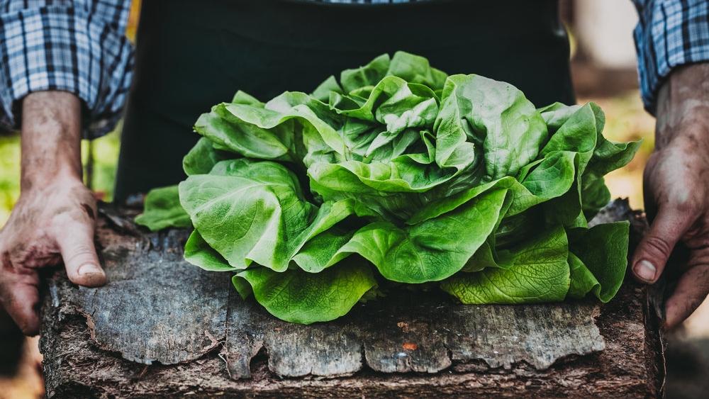 What a Farmer Can Teach a Chef